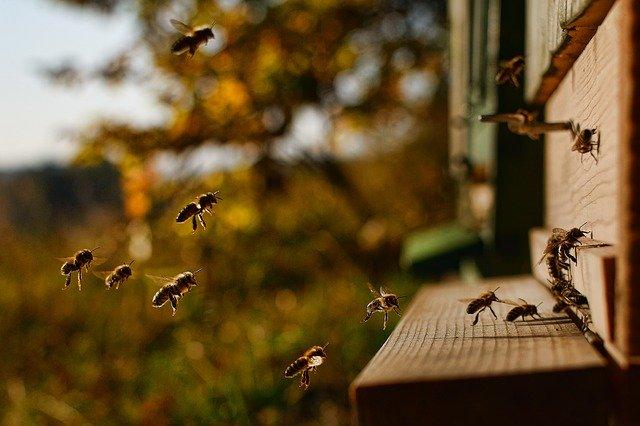 ミツバチが巣箱に変える様子