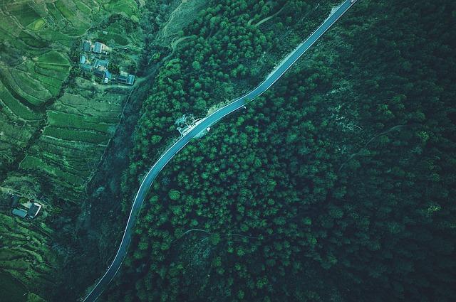 森を上空から撮影