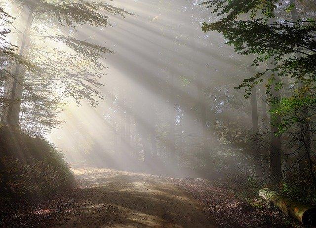 神秘的な林道