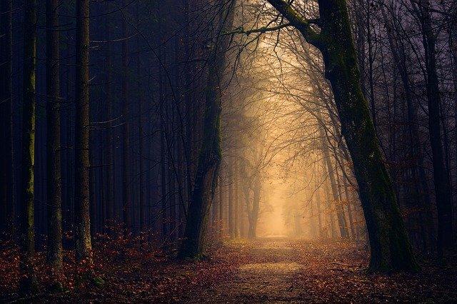不気味な林道