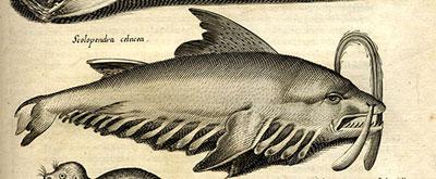 ムカデクジラ