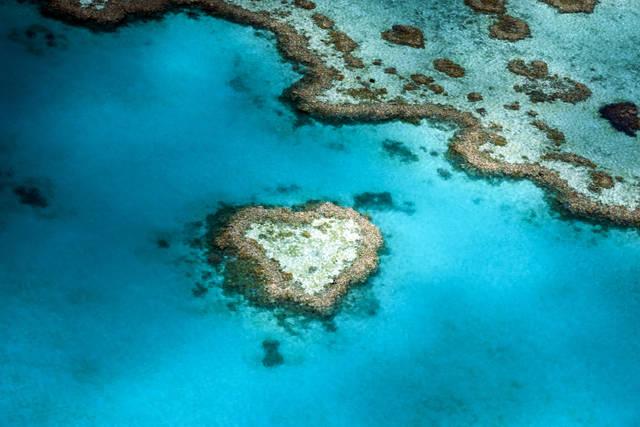 幸せをもたらすサンゴ礁!ハートリーフ