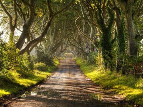 魔女の森 イギリス