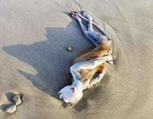 未確認生物の死骸が発見