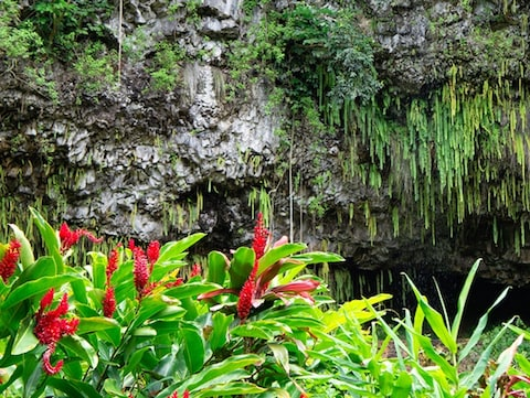 シダの洞窟(ハワイ)